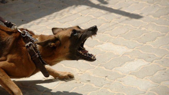 Tratamiento de la agresividad canina