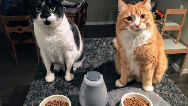 Lo que hacer si el gato no come