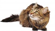 ¿Cómo podemos educar a un gato rebelde?