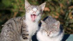 Los comportamientos de los gatos pueden reflejar los de sus dueños, según un estudio