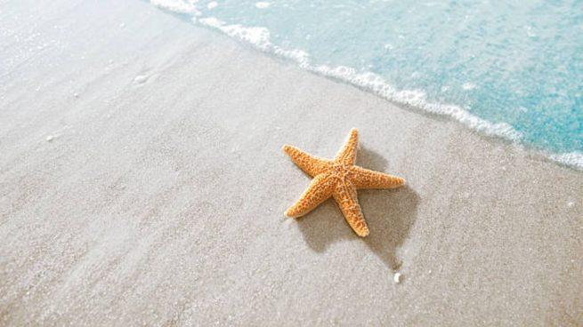 hacer una estrella de mar con yeso