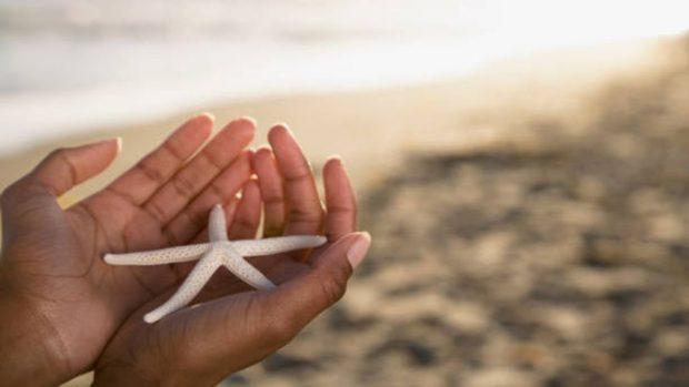 hacer estrella de mar con yeso