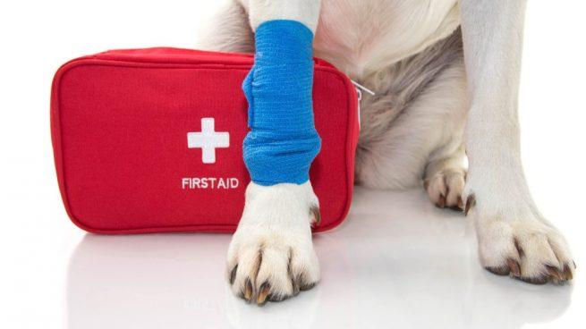 Primeros auxilios para tu perro