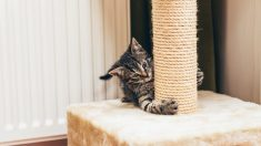 Tipos más comunes de rascadores para gatos
