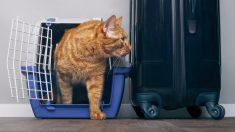 ¿Qué preparar para llevar a tu gato de vacaciones?
