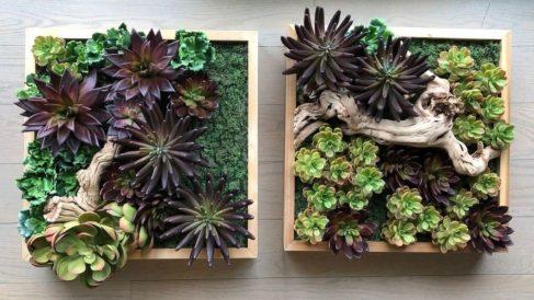 Pasos para hacer un cuadro de cactus naturales