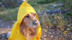 Cómo hacer un impermeable para perros paso a paso