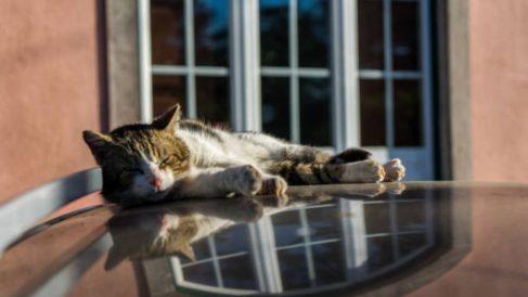 Cómo mantener a los gatos alejados del coche con remedios caseros