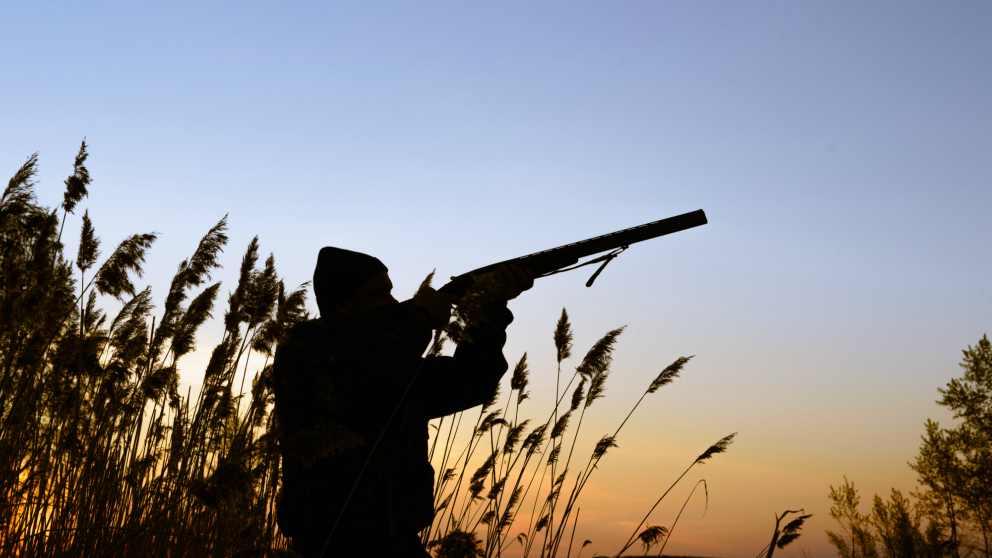 Qué podemos hacer contra los cazadores furtivos
