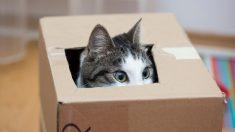 Se dice que los gatos son muy curiosos, ¿es cierto?