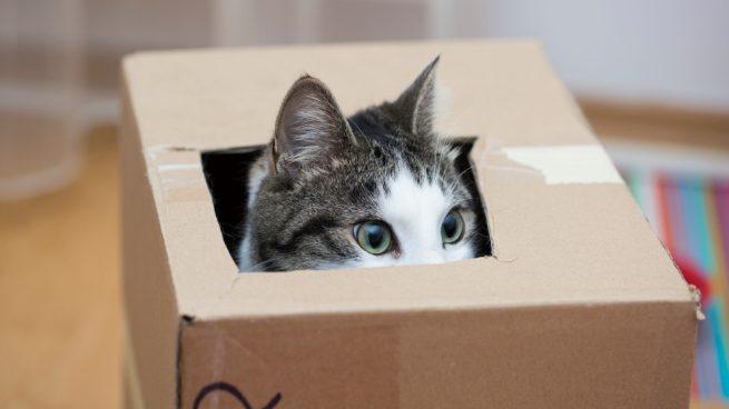 ¿Son curiosos los gatos?
