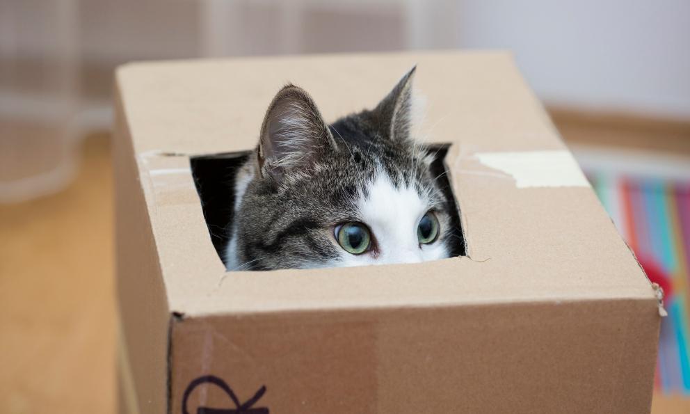 Son realmente muy curiosos los gatos?