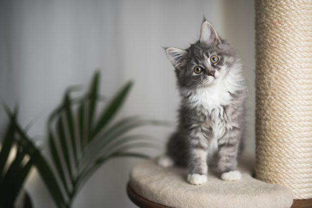 ¿Son realmente muy curiosos los gatos?