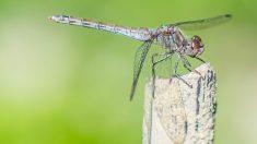 Los mosquitos son una pesadilla cada verano