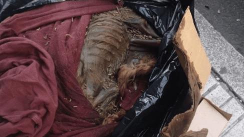 Bolsa de basura con los restos mortales del perro de la acusada de maltrato animal @EP