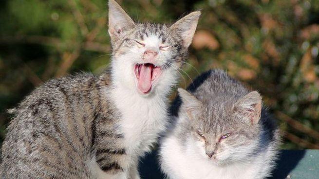 El Día de los Gatos fue instaurado en 2002 por el Fondo Internacional para el Bienestar Animal.