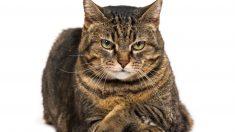 Consejos para tratar a un gato nervioso