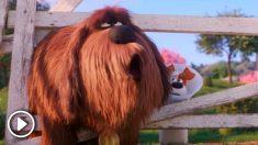 Estrenos de cine: la vida secreta de las 'Mascotas', historias de terror y comedias familiares