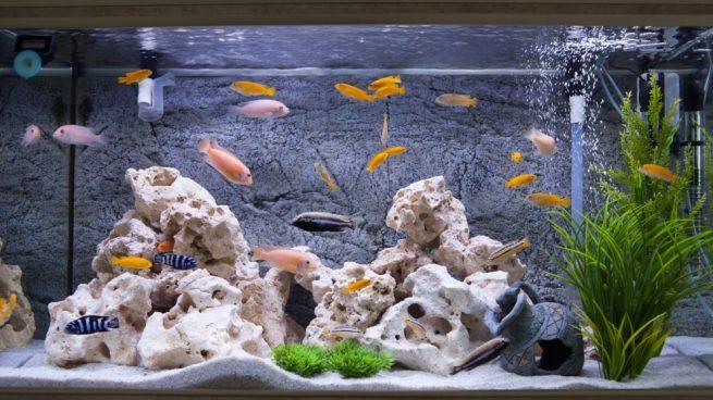 Lo que no puede faltar en tu acuario