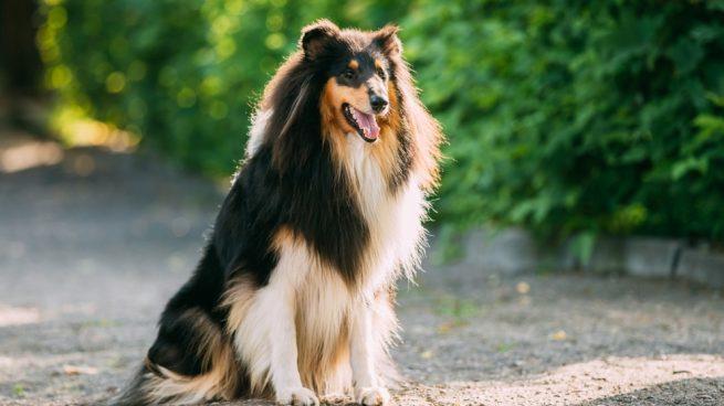 Perros famosos en la historia
