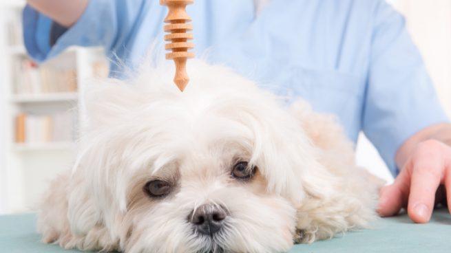 Tu mascota necesita un psiquiatra