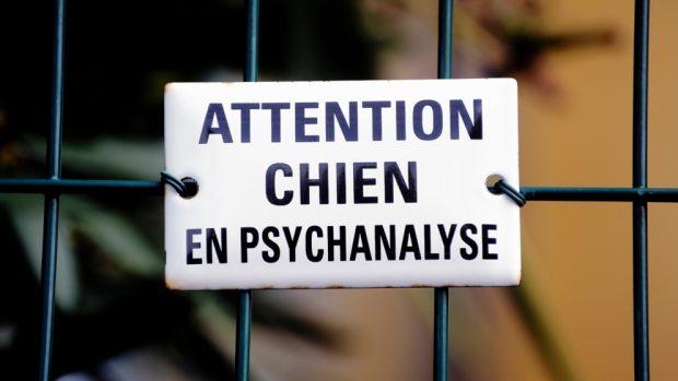 Señales de que tu mascota necesita un psiquiatra