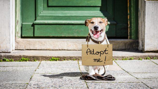 Rescatar a un perro abandonado