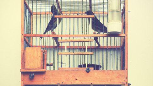 Algunos modelos de jaulas para pájaros
