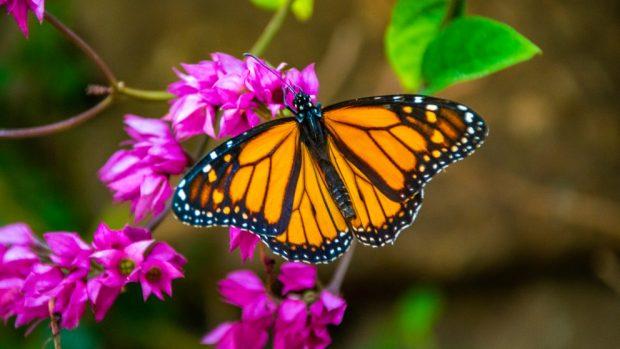 Los colores de las mariposas