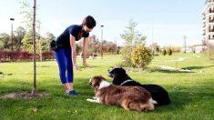 Consejos sobre terapias de conducta para tu perro