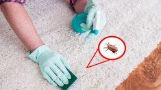 Consejos para tener tu hogar sin pulgas