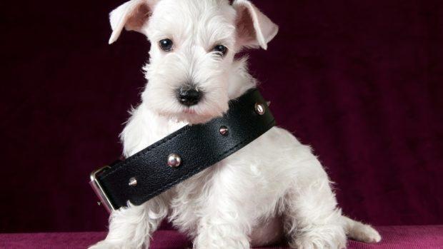 El collar de tu perro