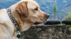 Algunos tips sobre el collar de tu perro