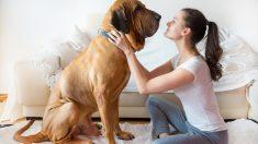 Consejos para adoptar un perro grande