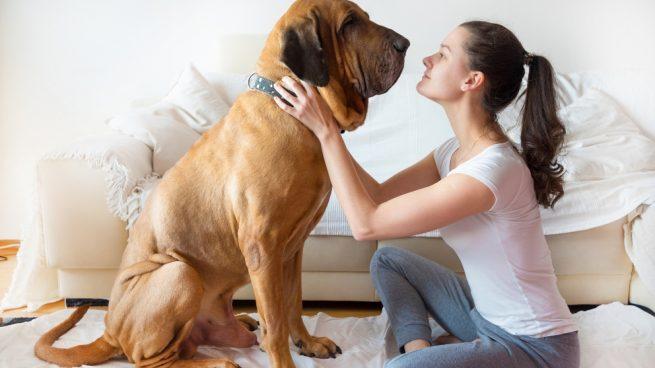 Adoptar un perro grande