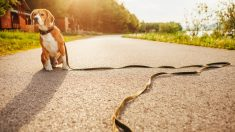 Consejos para encontrar a tu perro perdido