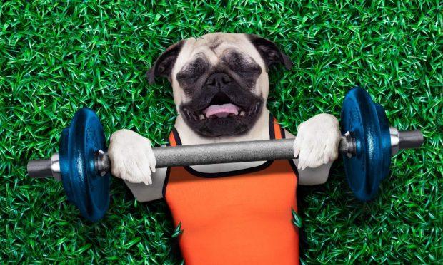 Colesterol en el perro