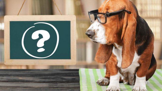 Amnesia en mascotas