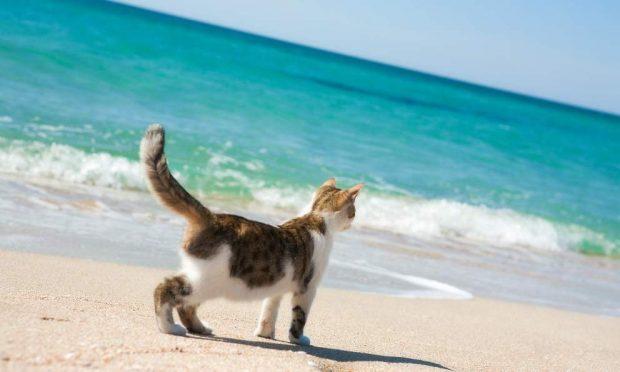 Llevar a tu gato a la piscina o la playa