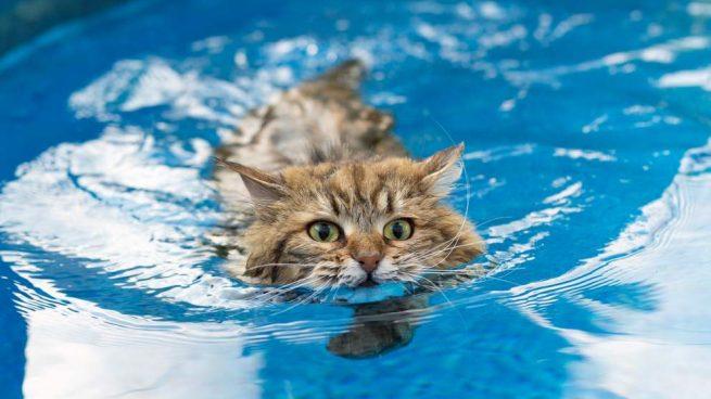 Gato a la piscina o la playa