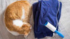 Prevención y tratamiento alopecia en gatos