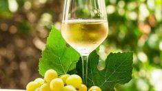 La OCU da algunas recomendaciones sobre a qué temperatura se bebe cada vino.