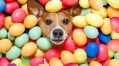 Pelaje del perro, diferentes colores