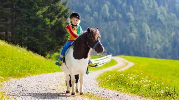 Todo sobre el pony