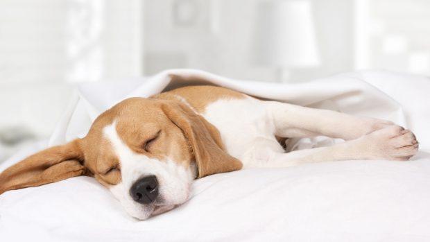 El sedentarismo en tu mascota