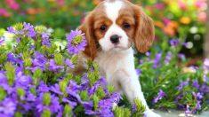 ¿Cómo es la terapia floral para tu perro?
