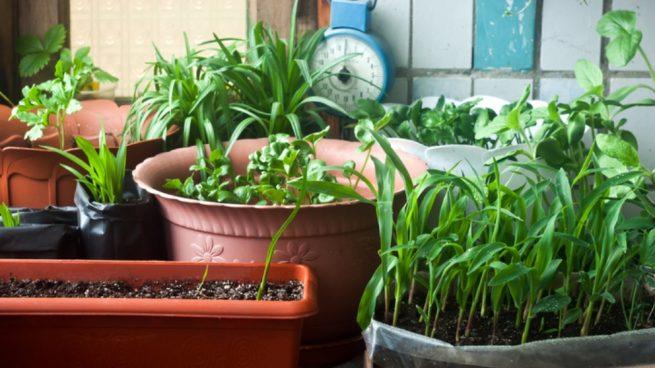 Hacer un huerto casero de plantas aromáticas y medicinales