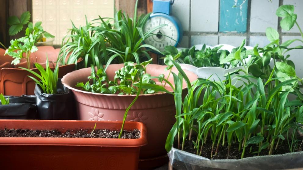 Pasos para hacer un huerto casero de plantas aromáticas y medicinales