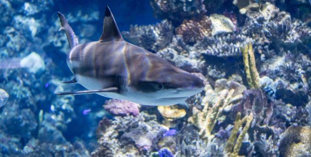 ¿Cómo bucear con tiburones?