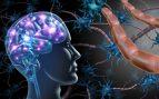 La función de la mielina en el cuerpo